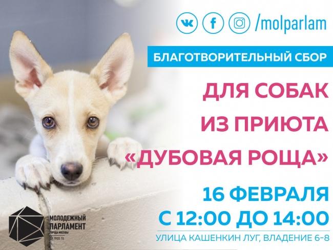 Молодые парламентарии Марфина проведут благотворительную акцию для приюта «Дубовая роща»