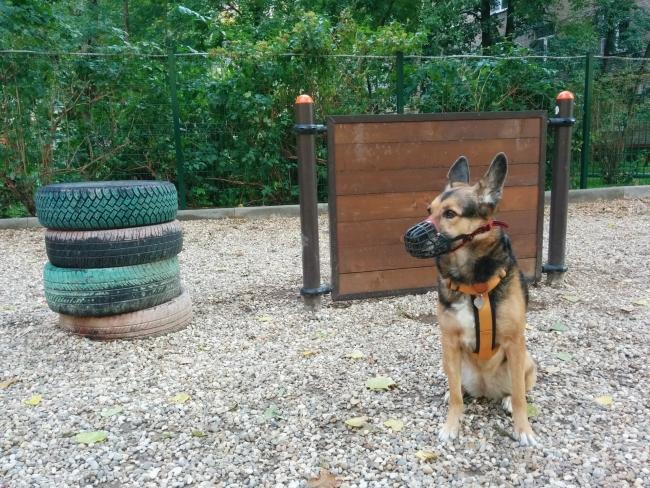 В районе Ново-Переделкино благоустроят площадку для собак