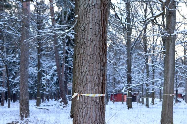 В районе Ново-Переделкино начался подсчёт зелёных насаждений