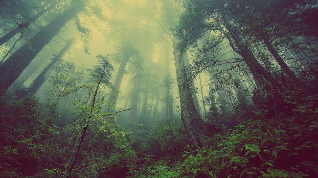 Красоты природы. ЦДТ «Ново-Переделкино» организовал онлайн-выставку «Пейзаж»