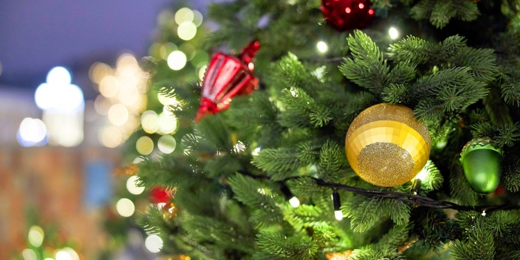 Елочные базары в ЗАО заработают 20 декабря