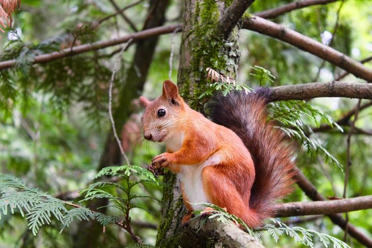 Чтобы белка не ленилась: когда начинать подкармливать лесную красавицу?