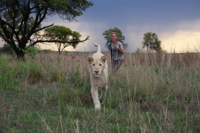 «Пионер» покажет «Мию и белого льва»