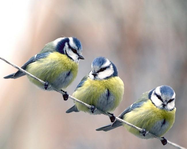 В Ботаническом саду МГУ отметят «День синички»
