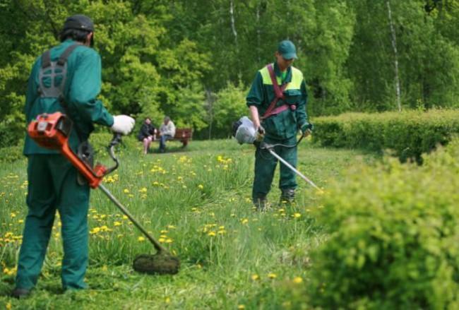 Граждане Тропарево-Никулино отличились вголосовании «Твой газон— твои правила»