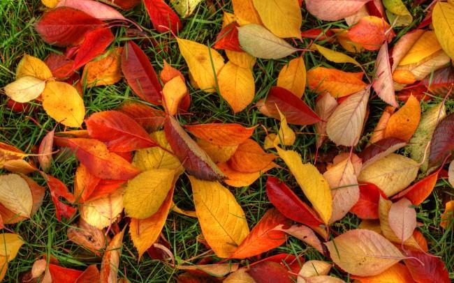 Москвичи определились справилами уборки листьев в собственных дворах
